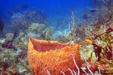 10-Day, 16-Dive Scuba Tour in Grenada