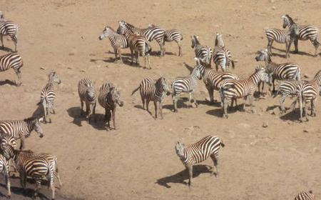 3-Day Mombasa Safari to Tsavo East and Salt Lick