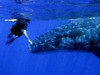 Scientific Dolphin and Whale Watching Expedition - Private Tour with a Cetacean Specialist