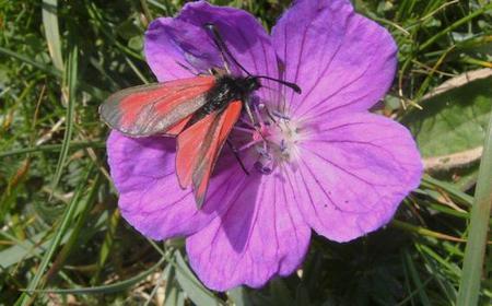 Burren and Connemara 5-Day Self-Guided Hike