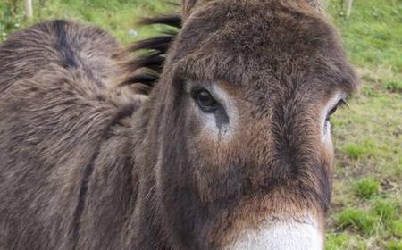 Burren and Connemara 8-Day Self-Guided Hike