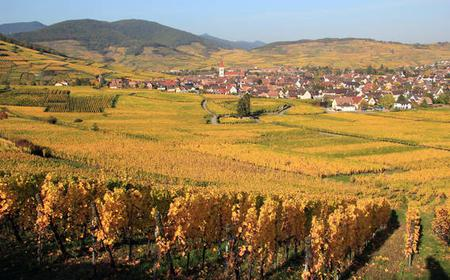 Alsace: Full-Day Wine Tour & Tastings from Colmar