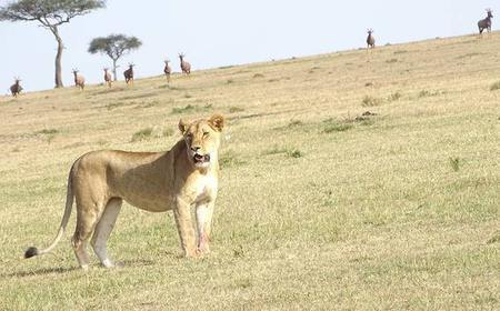 Nairobi: Full-Day National Park Safari