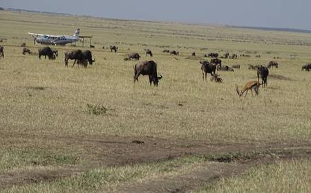 Nairobi: 3-Day Masai Mara Budget Safari