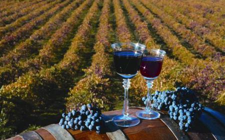 Napa & Sonoma Full-Day Wine Tasting Experience