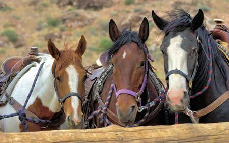 Horse Riding at Red Rock Canyon - Tour from Las Vegas