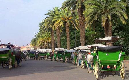 Marrakech Gardens Tour by Horse-Drawn Carriage