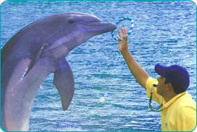 Ocho Rios: Dolphin Trainer for a Day at Dolphin Cove
