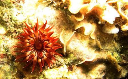 Paraty Scuba Dive at Ocean Reefs 45-Minute Tour