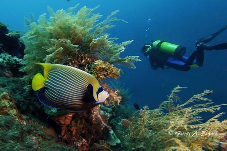 Diving Day Trip at Nusa Penida's Manta and Mola Mola sites (Fun diving & 2 x dives for advanced divers)