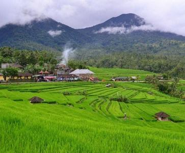 Full Day Tour in the Heart of Bali