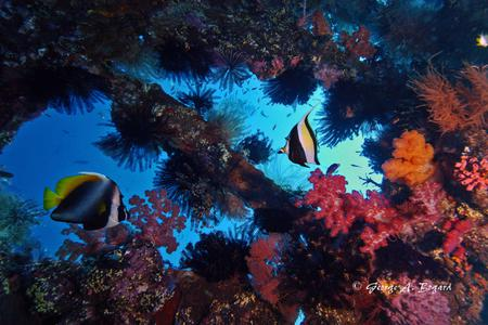 Diving Day Trip at Padangbai's Blue Lagoon (All Divers)