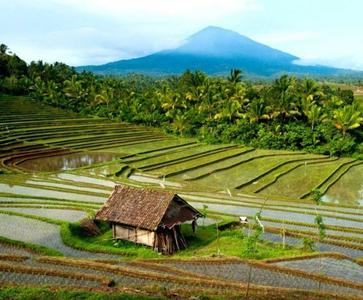 Full Day Visit of North Bali