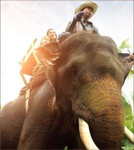 Short Elephant Back Riding In Ubud