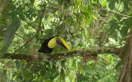 La Fortuna Bird Watching Tour with Naturalist Guide