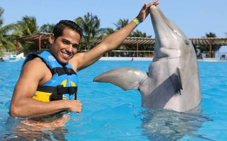 Playa del Carmen: Dolphin Encounter Ideal for Kids