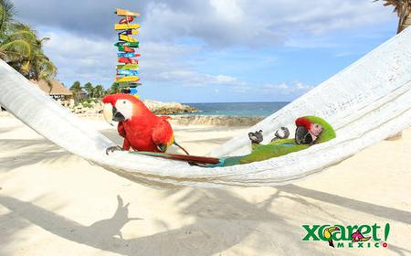 From Cancun: Xcaret First Access with Express Transfer