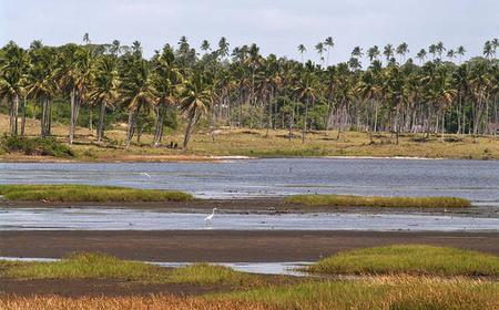 Recife: Full-Day Off-Roading Safari in Pernambuco
