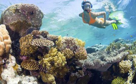 Catalina Island VIP Snorkeling Experience