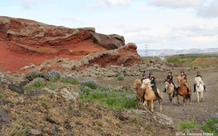 Iceland Horse Riding Tours
