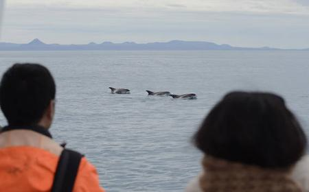 Reykjavik: 2-Hour Whale and Puffin Watching Tour