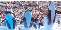 Sea World San Diego Full-Day Ticket with Transportation