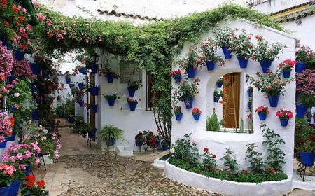 Sights, Sounds, and Scents of Córdoba's Patios
