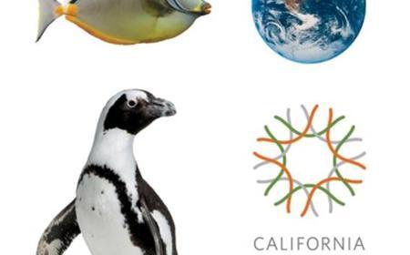 San Francisco: Aquarium at California Academy of Sciences