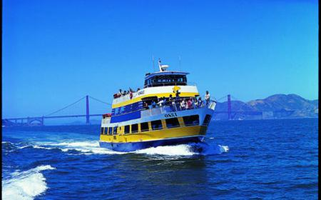 Experience PIER 39's Top Attractions