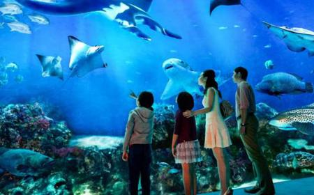 Singapore: S.E.A. Aquarium 1-Day Admission Ticket