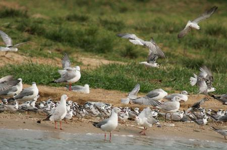 Full-Day Bird Watching Guided Tour To Lutembe Bay Entebbe from Kampala