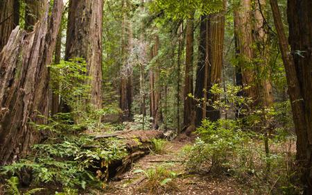 Muir Woods and Sausalito Tour With Optional San Francisco Bay Cruise