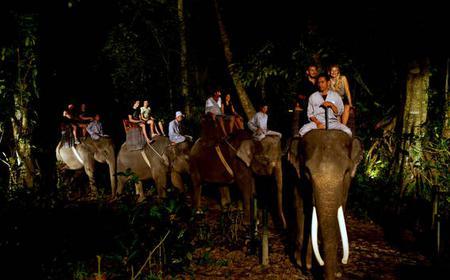 Ubud: Evening Night Safari at Bali Elephant Park