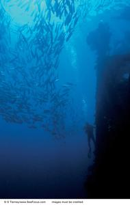 Introductory Diving Day Trip at Tulamben Bay Liberty Shipwreck - for Beginners (2 x discovery dives)