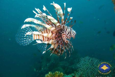 Diving for Certified Diver in Padang Bay