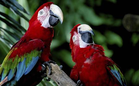 Singapore: Half-Day Jurong Birdpark Tour