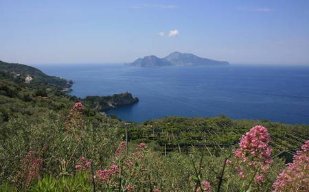 Sorrento Coast Vespa Tour with Farm Stop