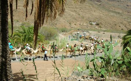From Maspalomas: Camel Ride Safari & Barbecue