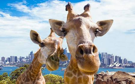 Hop-on Hop-off Cruise and Taronga Zoo Combo