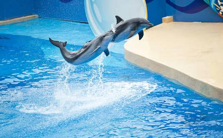 Hong Kong: Ocean Park Tour with Hotel Pickup and Drop-off