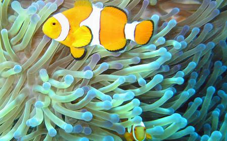 Sharm el Sheikh: Snorkel Tour of Tiran Island