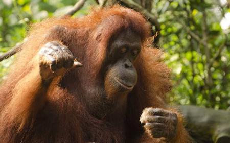 Kuching: Half-Day Semenggoh Wildlife Rehabilitation Center