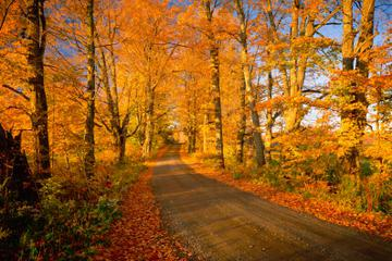 Fall Foliage Sightseeing Tour from Boston