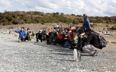 Ushuaia: Walk With the Penguins of Martillo Island