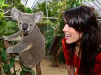Breakfast with the Koalas at WILD LIFE Sydney Zoo