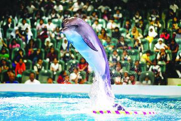 2-Day Afternoon Desert Safari, Dubai Dolphinarium and Half-Day City Tour From Dubai