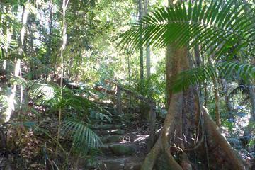 Kuranda Guided Interpretive Rainforest Walk Including Refreshments