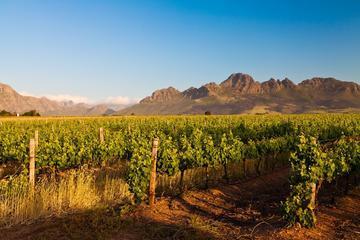 Cape Town Shore Excursion: Winelands Tour