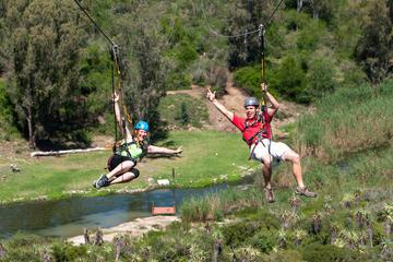 Port Elizabeth Shore Excursion: Addo Zipline Tour and Giant Swing Experience