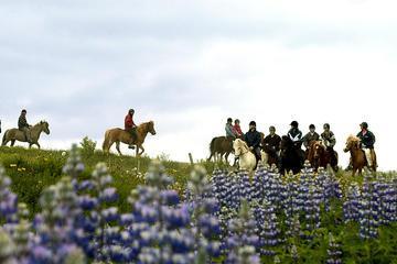 Horseback Riding Day Tour at Laxnes Farm from Reykjavik